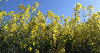 Vom Wortpuzzle bis zum Blumenmandala